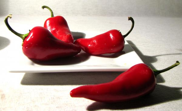 red hot chili Por qué los ajies o chiles pican?